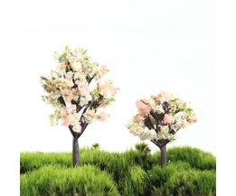 Miniature Peach Tree