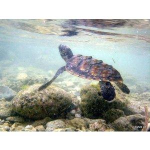 Anna Plush Zeeschildpad