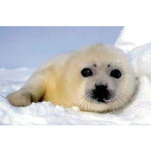 Anna Plush WWF zeehondje