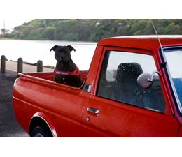 Ezy Dog Tuig Quick Fit rood