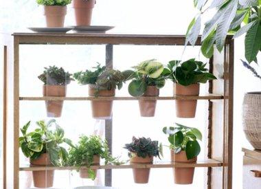 Verzorging van vetplanten