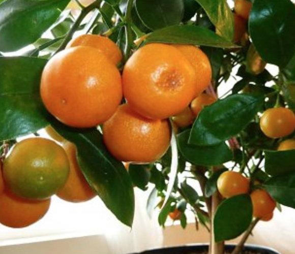Verzorging van mediterrane planten
