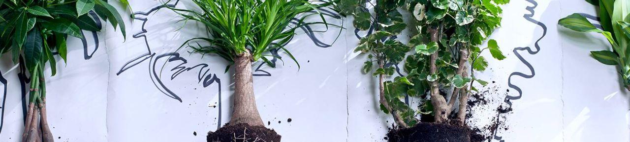 Online Kamerplanten, orchideeën en kantoorplanten kopen