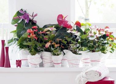 Kamerplanten voor in de lente