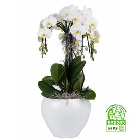Fleur.nl - Orchidee Waterfall in Pot White