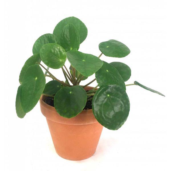 Pilea Pannenkoekplant in terra cotta