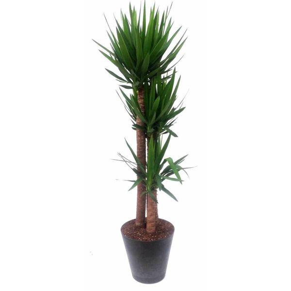 Yucca Elephantipes xl met Artstone pot Antraciet