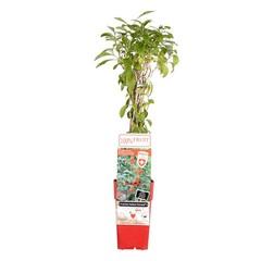 Alle tuinplanten