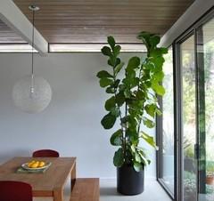 Kamerplanten in de herfst: Trends en verzorging