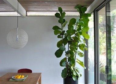 Verzorging van kamerplanten in de herfst en winter