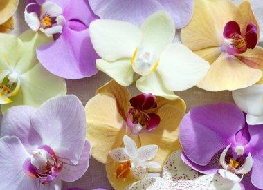 Verzorging van orchideeën