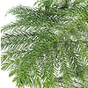 Araucaria Heterophylla (kamerden)
