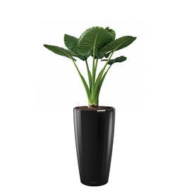 Fleur.nl -Lechuza Alocasia in  watergevende pot rondo