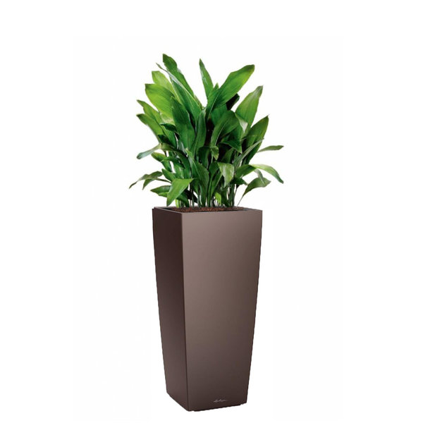 Lechuza Aspidistra in watergevende pot