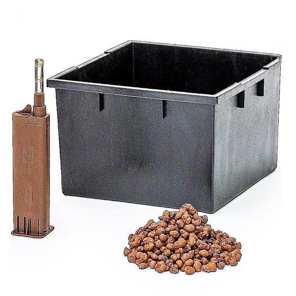 Dracaena Janet Lind met pot - hydrocultuur