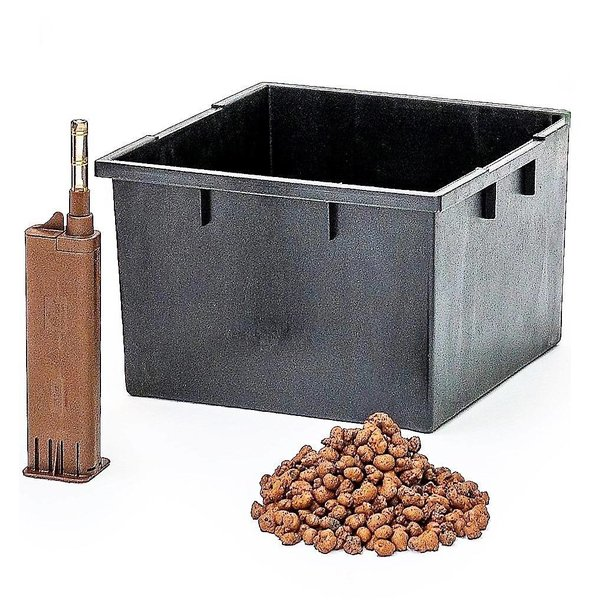 Dracaena Janet Craig met pot - hydrocultuur
