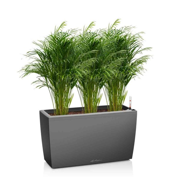 Lechuza Areca palm in watergevende pot Cararo