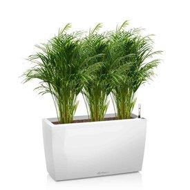 Fleur.nl -Lechuza Areca palm in watergevende pot Cararo