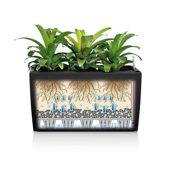 Lechuza Calathea Blue Grass in watergevende pot Cararo