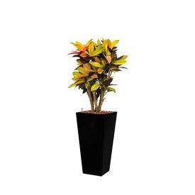 Fleur.nl - Croton (Codiaeum) Iceton in watergevende pot - square