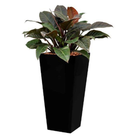 Fleur.nl - Philodendron Imperial Red in watergevende pot - square