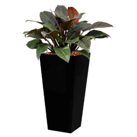 Philodendron Imperial Red in watergevende pot - square