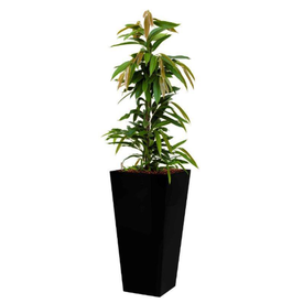 Fleur.nl - Ficus Amstel King in watergevende pot - square