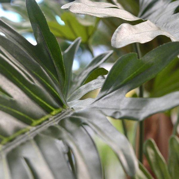 Philodendron Xanadu op stammen