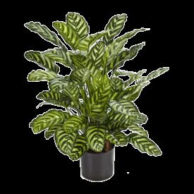 Fleur.nl - Calathea - kunstplant