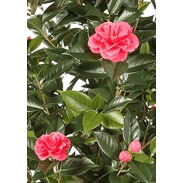 Camelia Japonica Roze - kunstplant