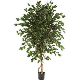Fleur.nl - Ficus Exotica de Luxe XL - kunstplant