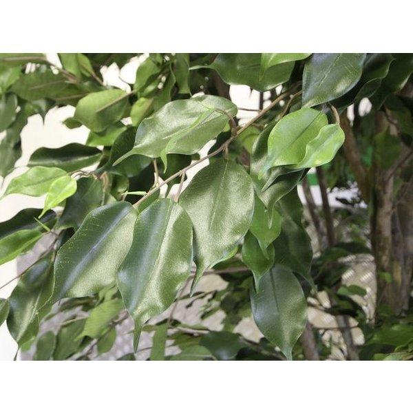 Ficus Exotica de Luxe XL - kunstplant