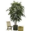 Ficus Exotica - kunstplant