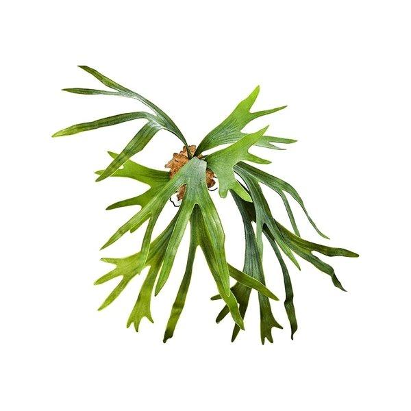 Staghorn Fern - kunstplant