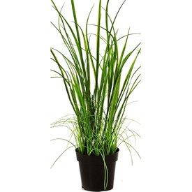 Fleur.nl - Wild Grass - kunstplant