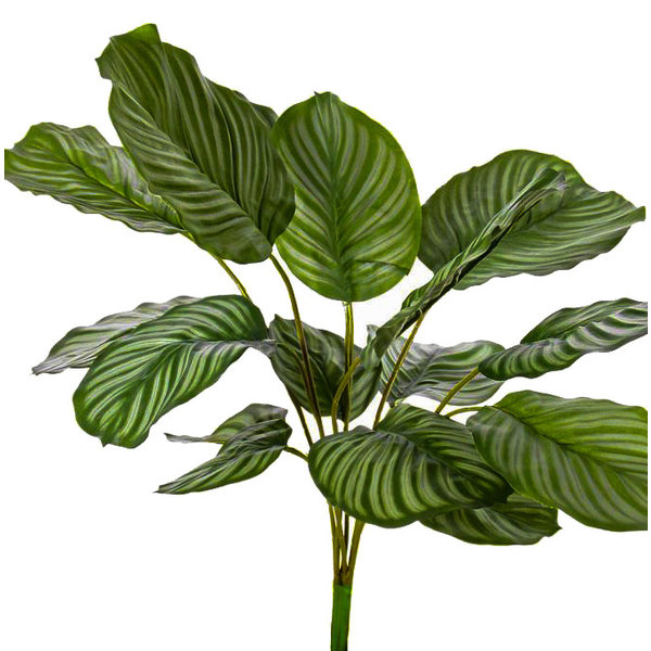 Calathea Orbifolia - kunstplant