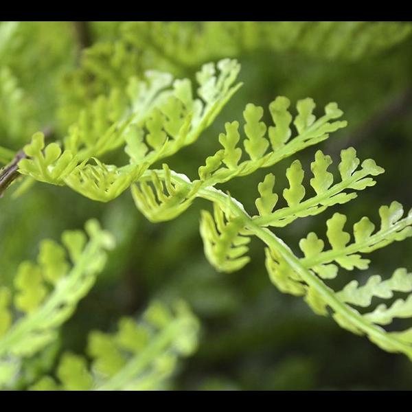 Athyrium Fern - kunstplant