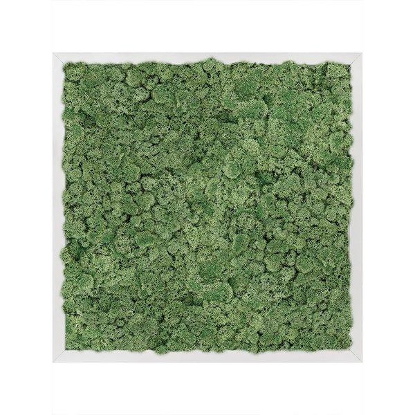 Rendiermos Donker Aluminium Schilderij Vierkant