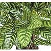 Calathea Zebrina - kunstplant