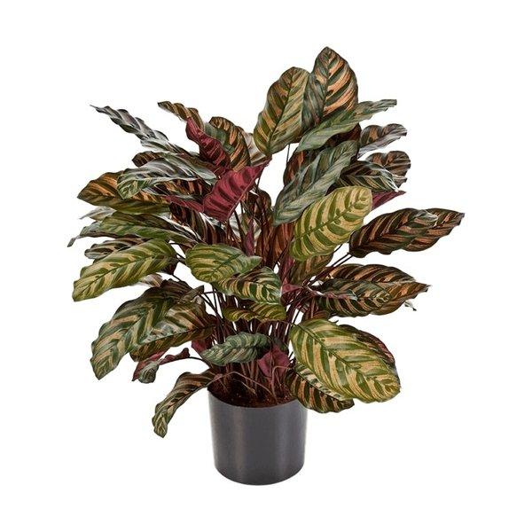 Calathea Makoyana - kunstplant