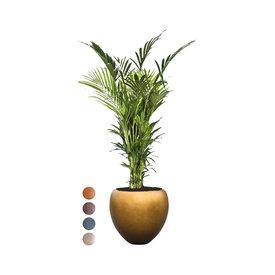 Fleur.nl - Kentia  in Pot Metallic Leaf