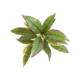 Fleur.nl - Cordyline Green/Red - kunstplant