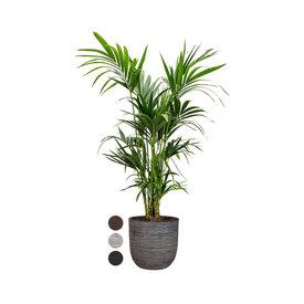 Fleur.nl - Kentia Palm Large in Capi Rib Urban Egg Planter