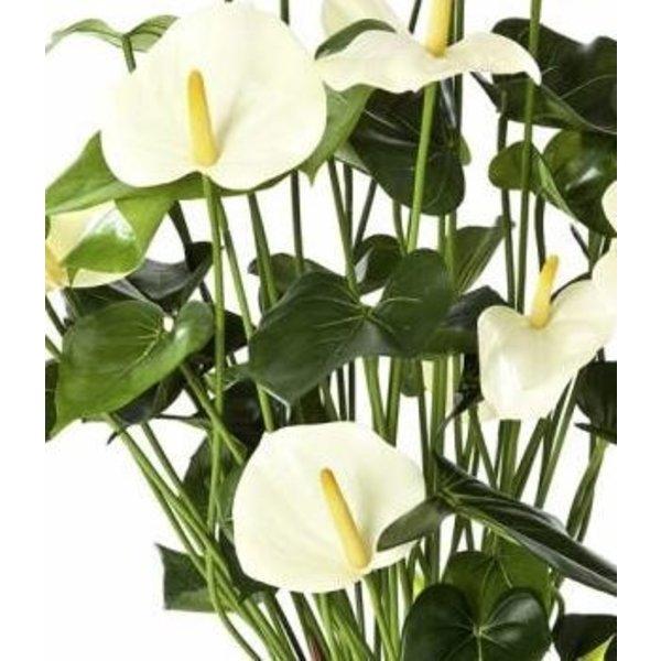 Anthurium de Luxe White - kunstplant