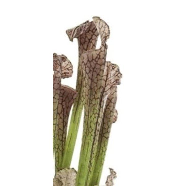 Sarracenia Brown - kunstplant