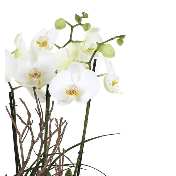 Orchidee White Complete in pot Stone