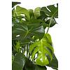 Monstera Gatenplant in Elho Soft Wit pot