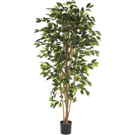Fleur.nl - Ficus Nitida Small - kunstplant