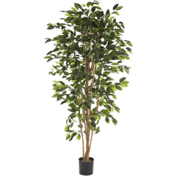 Ficus Nitida Small - kunstplant