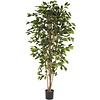 Ficus Nitida - kunstplant